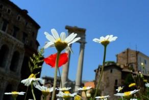 """Весна в Италии ощущается даже в сердце """"Вечного города"""""""