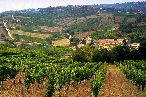 Лучшие винные регионы в Италии