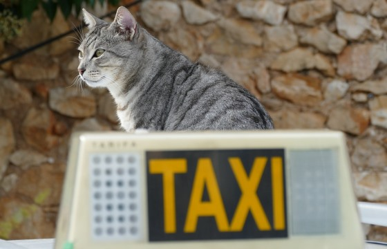 Такси в Римини
